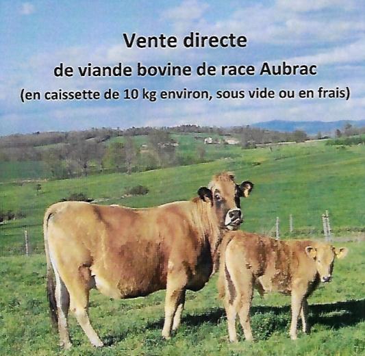 vente directe de viande bovine d'Aubrac